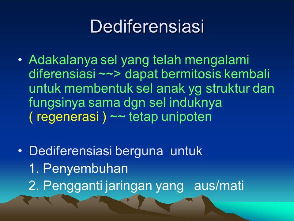 Dediferensiasi