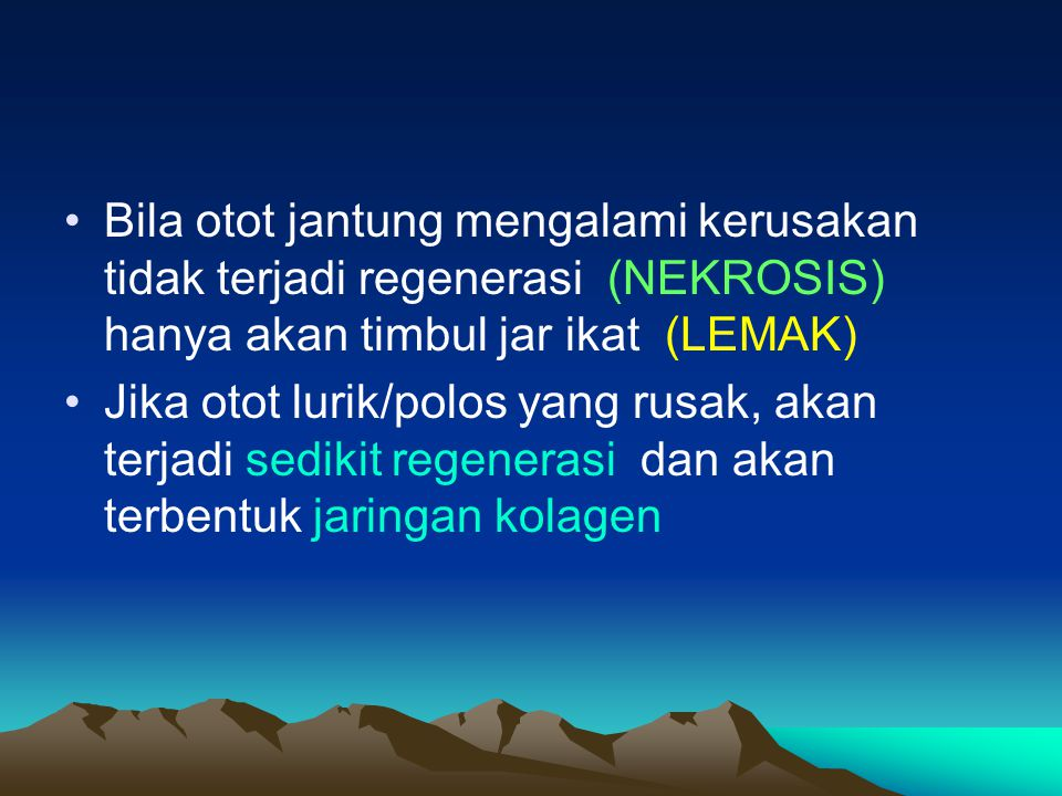 Bila otot jantung mengalami kerusakan tidak terjadi regenerasi (NEKROSIS) hanya akan timbul jar ikat (LEMAK)