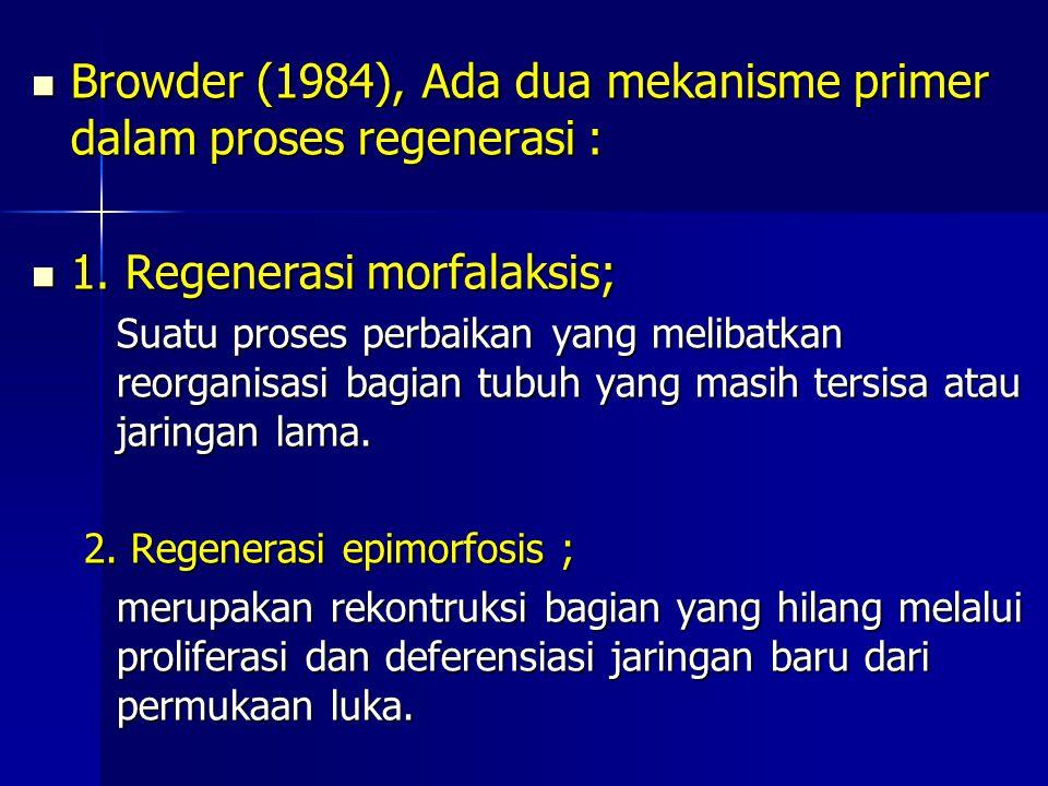 Browder (1984), Ada dua mekanisme primer dalam proses regenerasi :