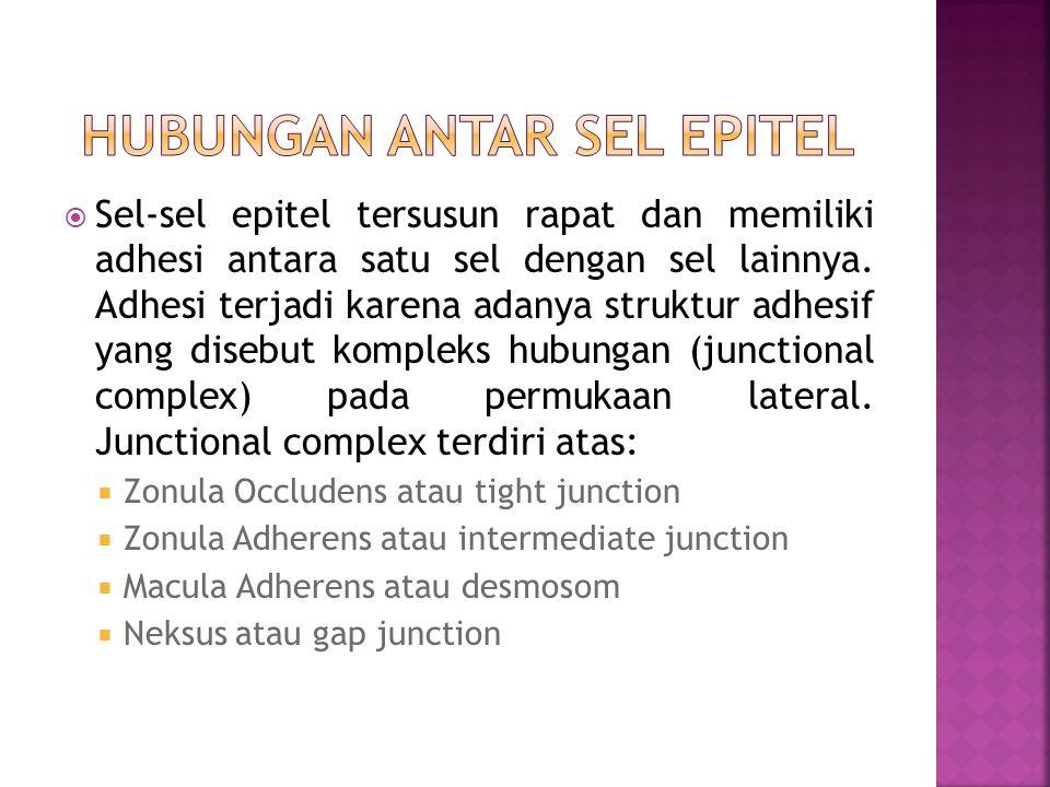 Hubungan antar sel epitel