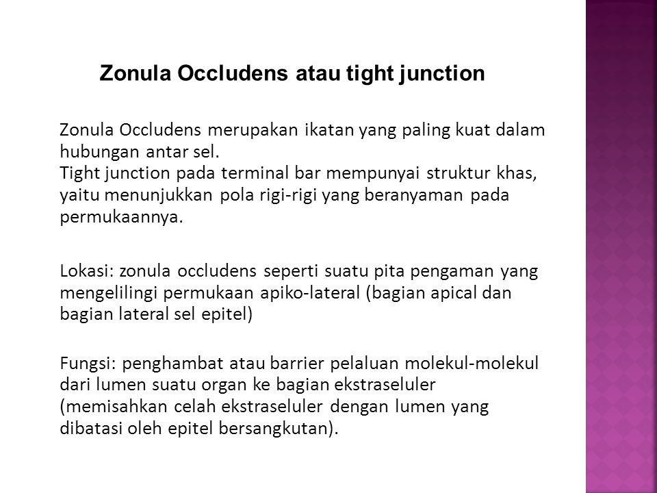 Zonula Occludens atau tight junction