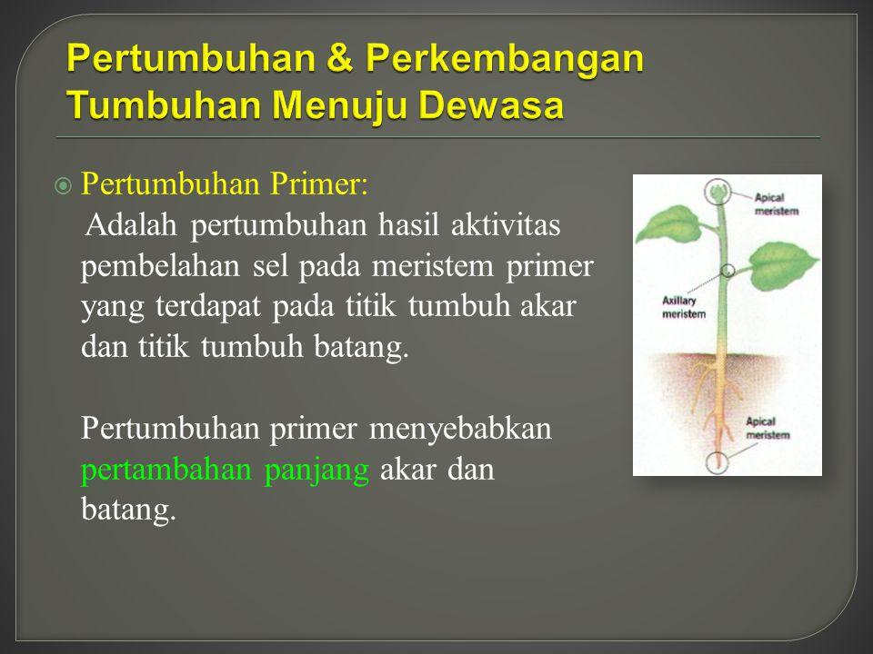 Pertumbuhan & Perkembangan Tumbuhan Menuju Dewasa