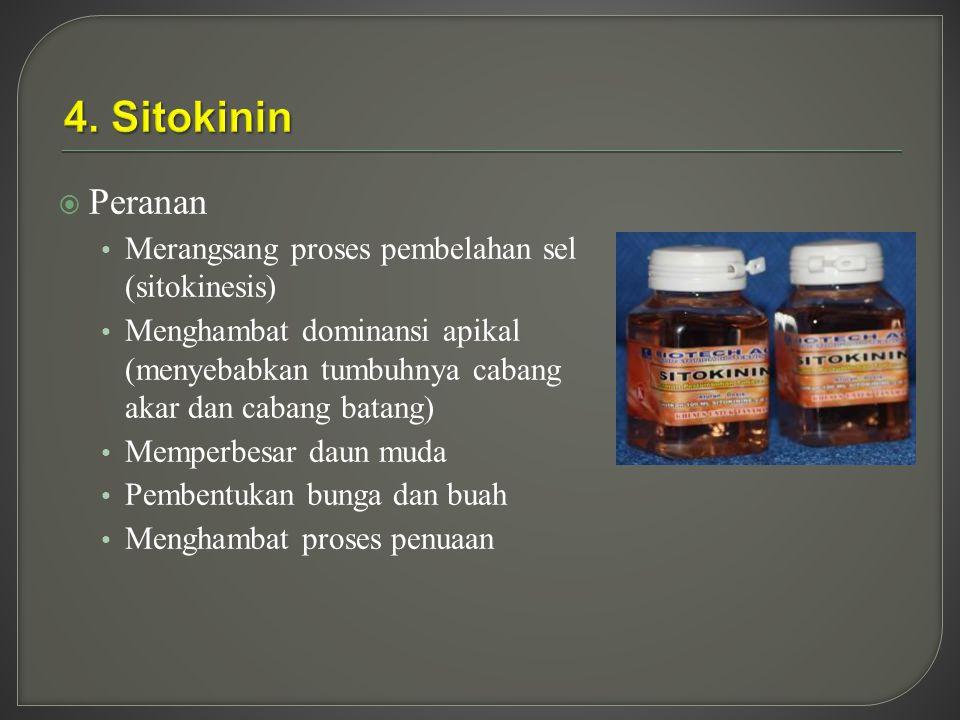 4. Sitokinin Peranan Merangsang proses pembelahan sel (sitokinesis)