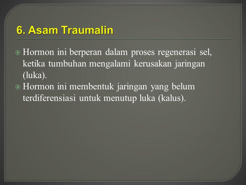 6. Asam Traumalin Hormon ini berperan dalam proses regenerasi sel, ketika tumbuhan mengalami kerusakan jaringan (luka).