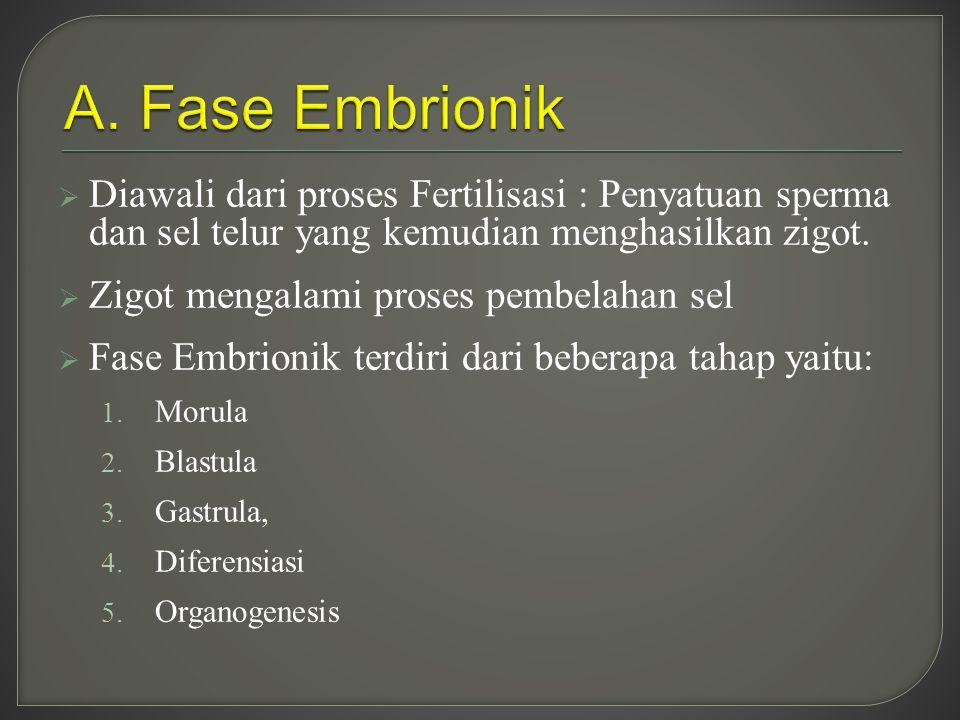 A. Fase Embrionik Diawali dari proses Fertilisasi : Penyatuan sperma dan sel telur yang kemudian menghasilkan zigot.