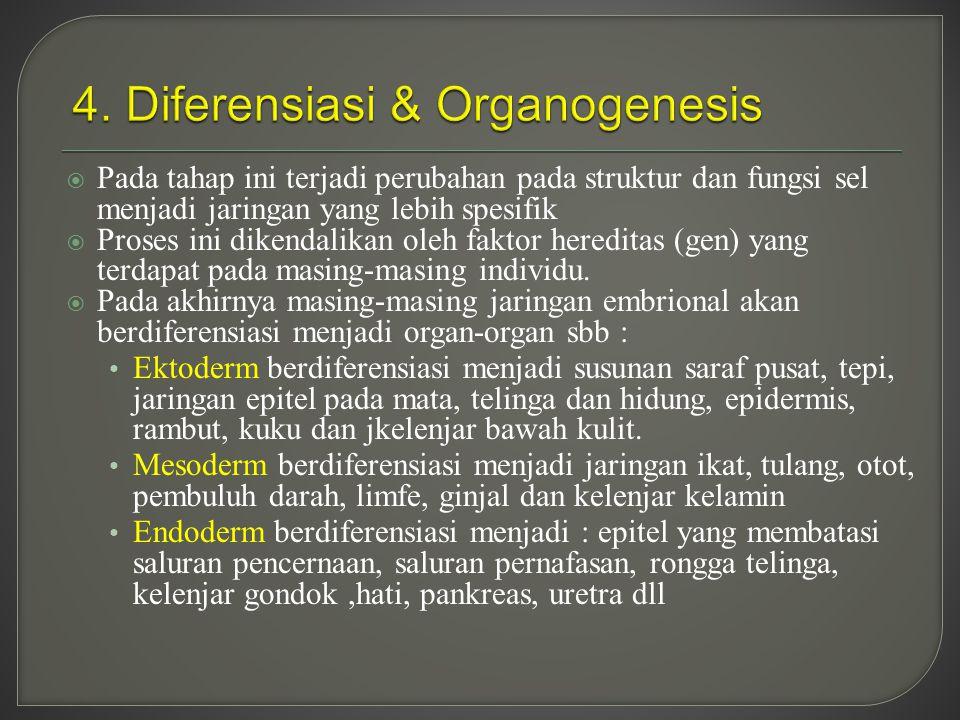 4. Diferensiasi & Organogenesis