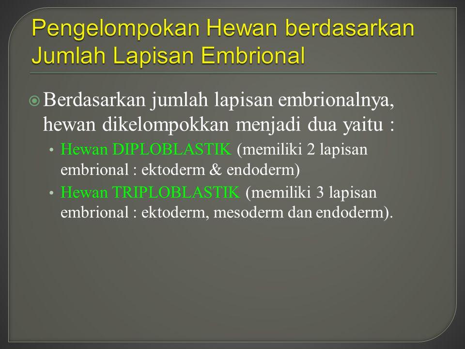 Pengelompokan Hewan berdasarkan Jumlah Lapisan Embrional