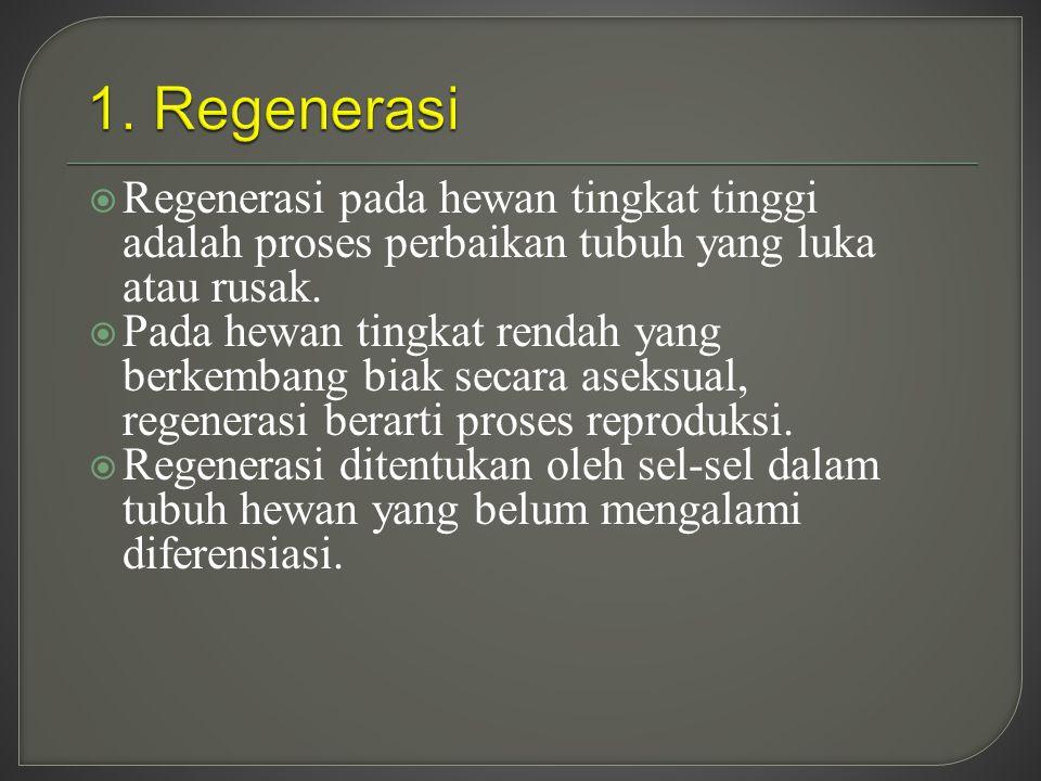 1. Regenerasi Regenerasi pada hewan tingkat tinggi adalah proses perbaikan tubuh yang luka atau rusak.