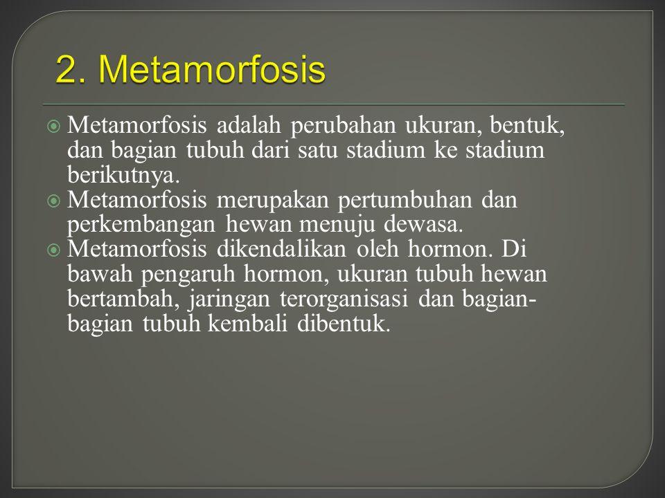 2. Metamorfosis Metamorfosis adalah perubahan ukuran, bentuk, dan bagian tubuh dari satu stadium ke stadium berikutnya.