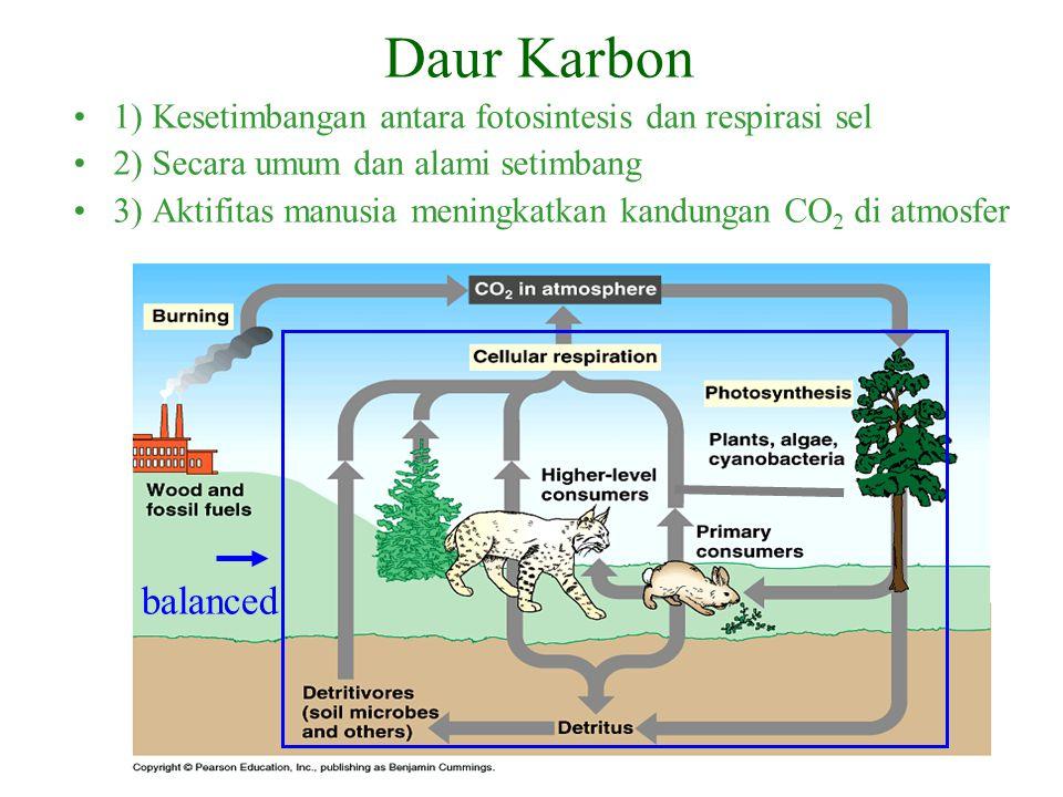 Daur Karbon 1) Kesetimbangan antara fotosintesis dan respirasi sel. 2) Secara umum dan alami setimbang.