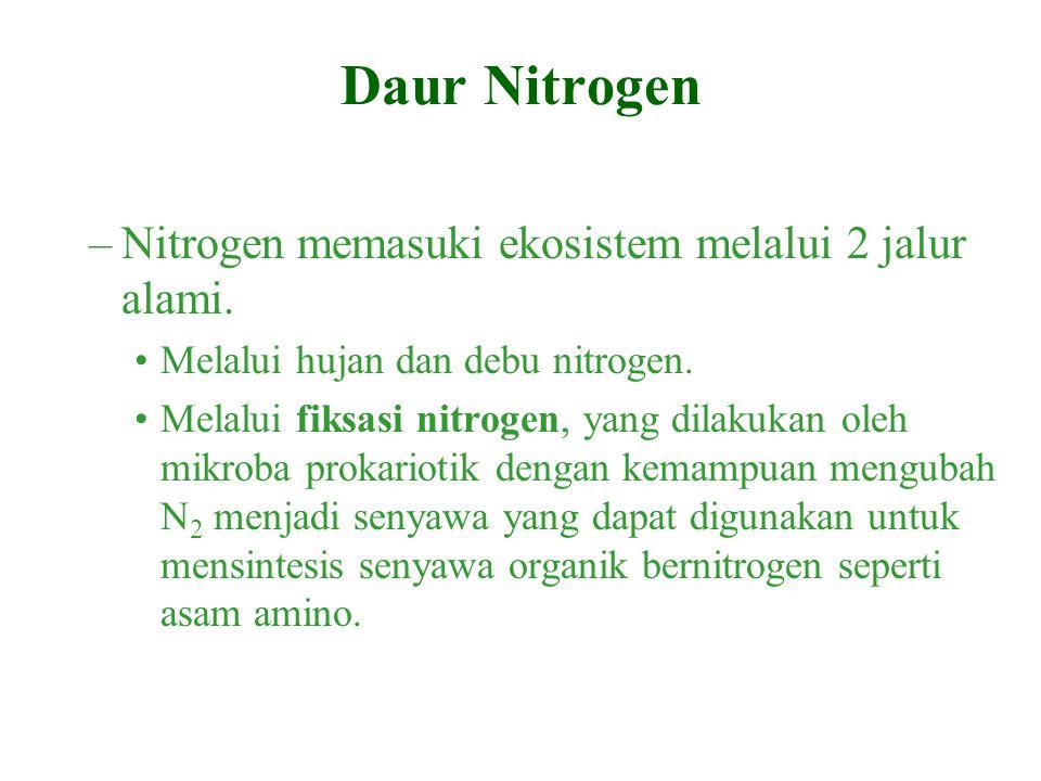 Daur Nitrogen Nitrogen memasuki ekosistem melalui 2 jalur alami.