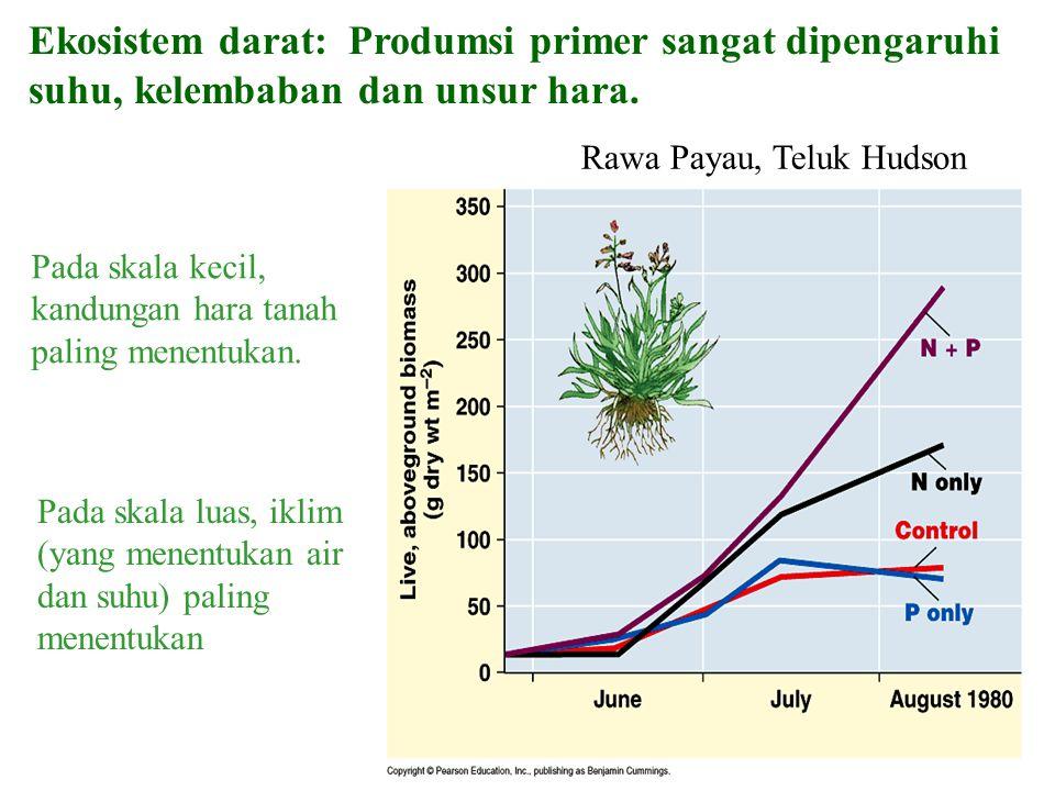 Ekosistem darat: Produmsi primer sangat dipengaruhi suhu, kelembaban dan unsur hara.