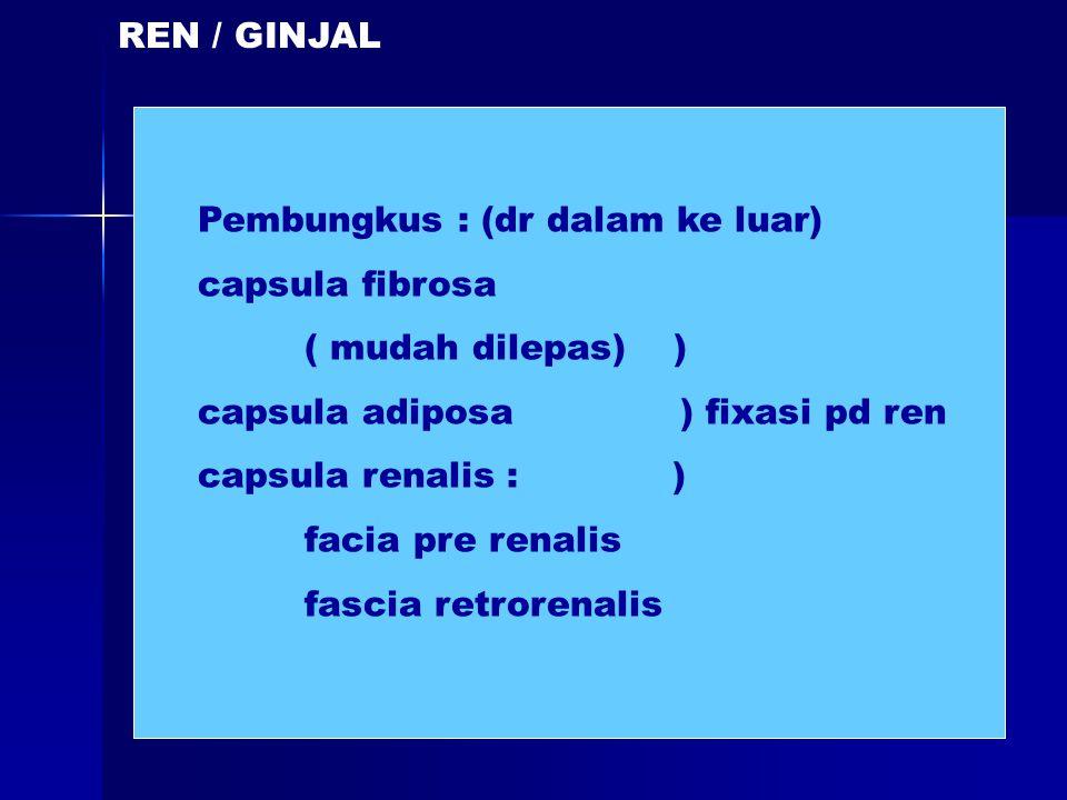 REN / GINJAL Pembungkus : (dr dalam ke luar) capsula fibrosa. ( mudah dilepas) ) capsula adiposa ) fixasi pd ren.