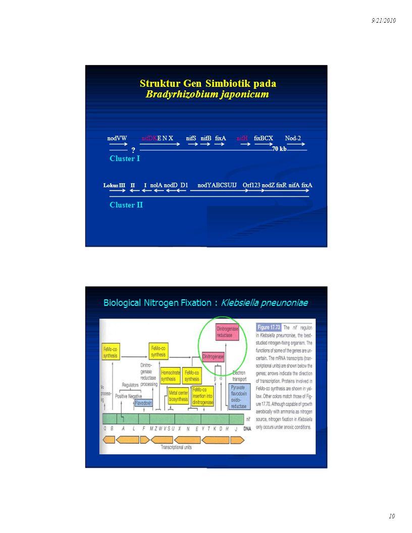 9/21/2010 Cluster II Struktur Gen Simbiotik pada
