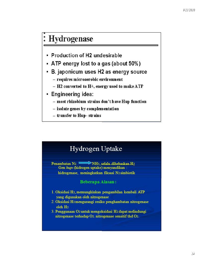 9/21/2010 Hydrogen Uptake. Penambatan N2. NH3, selalu dibebaskan H2. Gen hup. + (hidrogen uptake) menyandikan :