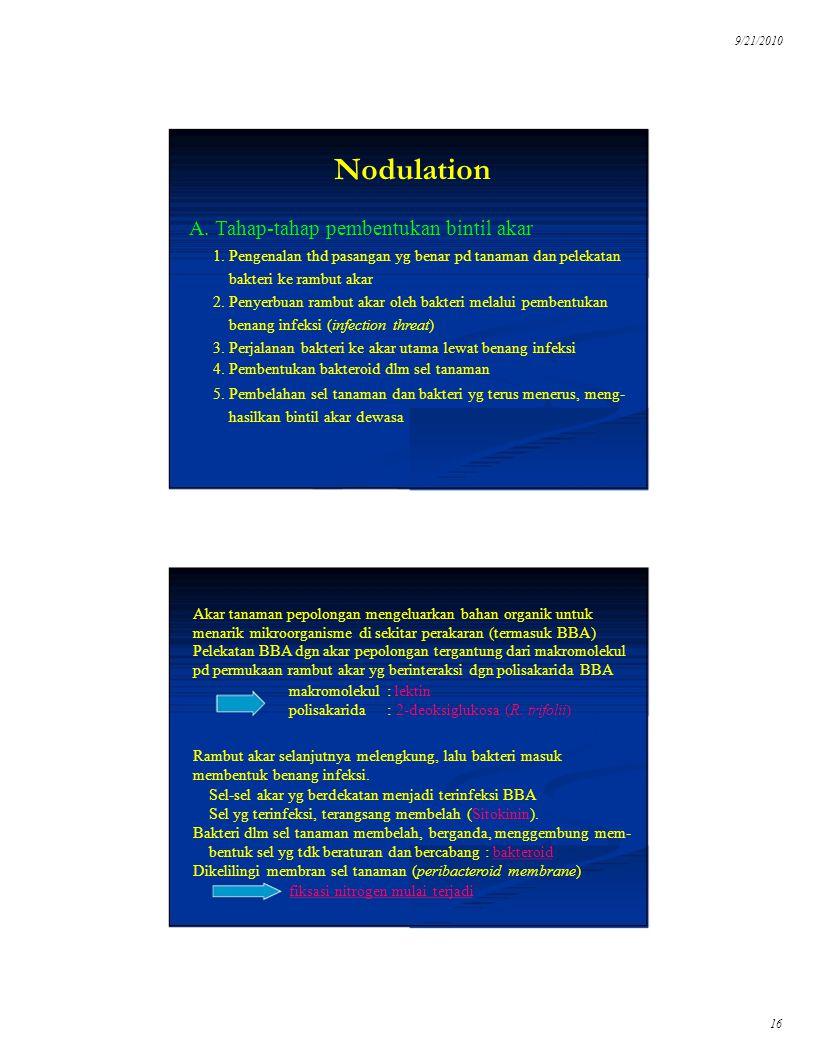 Nodulation A. Tahap-tahap pembentukan bintil akar