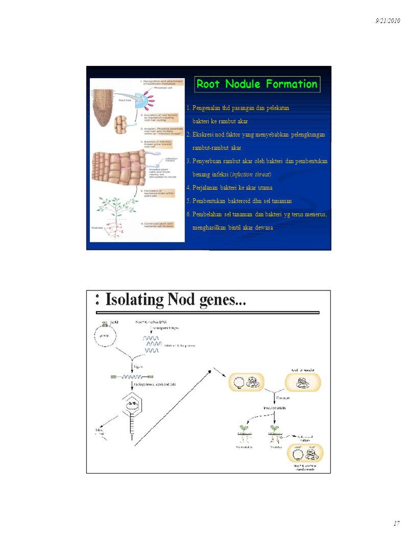 Root Nodule Formation 1. Pengenalan thd pasangan dan pelekatan
