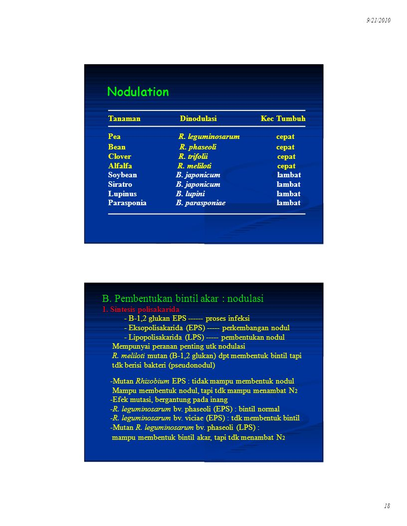 9/21/2010 Nodulation Dinodulasi B. Pembentukan bintil akar : nodulasi