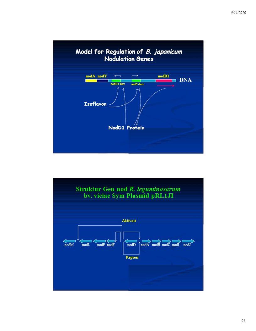 9/21/2010 Isoflavon Struktur Gen nod R. leguminosarum