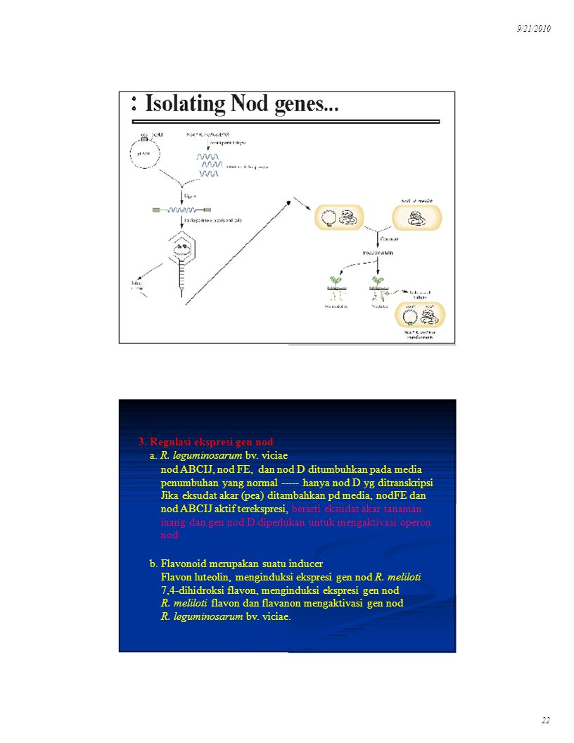 3. Regulasi ekspresi gen nod a. R. leguminosarum bv. viciae