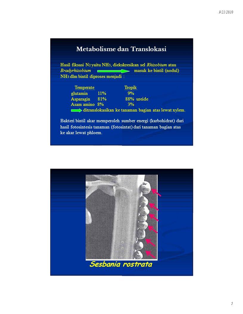 9/21/2010 Metabolisme dan Translokasi. Hasil fiksasi N2 yaitu NH3, diekskresikan sel Rhizobium atau.
