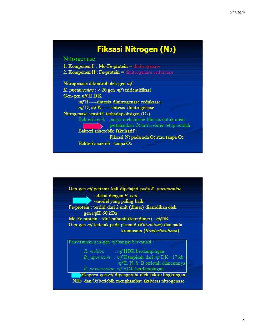 B. japonicum : nif H terpisah dari nif DK+ 17 kb