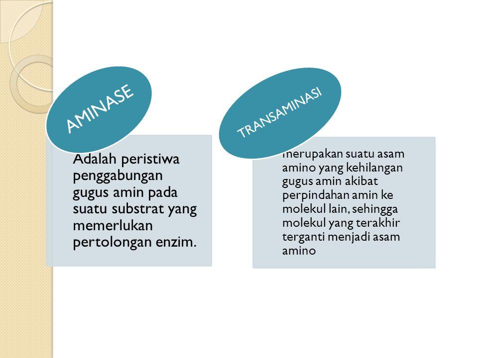 AMINASE Adalah peristiwa penggabungan gugus amin pada suatu substrat yang memerlukan pertolongan enzim.