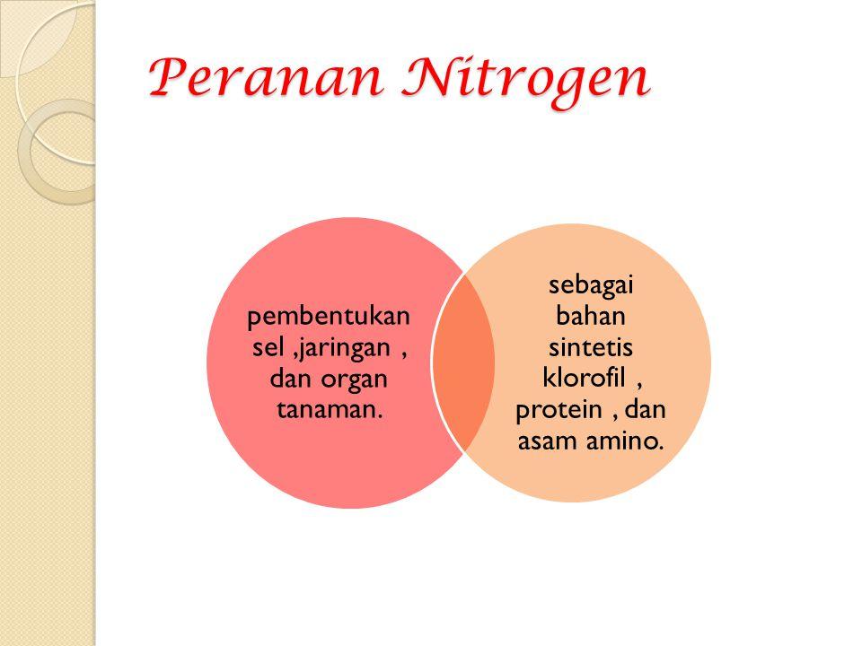 Peranan Nitrogen pembentukan sel ,jaringan , dan organ tanaman.