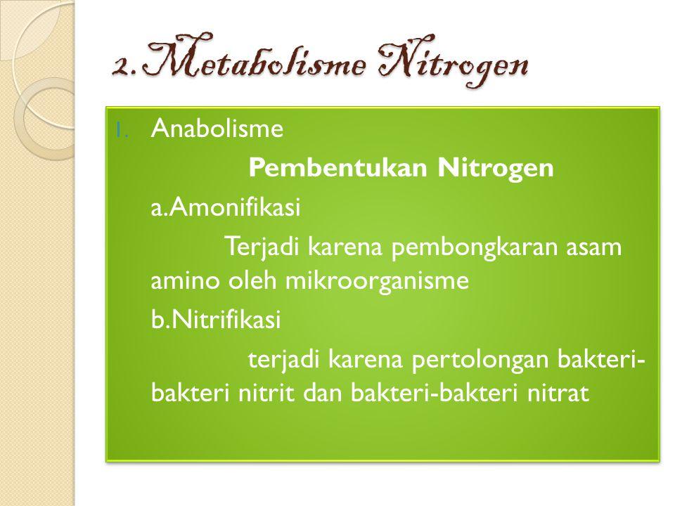 2.Metabolisme Nitrogen Anabolisme Pembentukan Nitrogen a.Amonifikasi