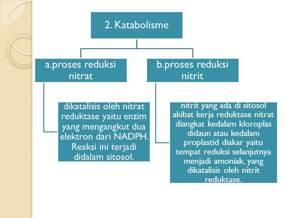 2. Katabolisme a.proses reduksi nitrat.