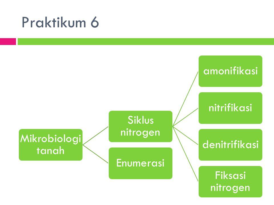 Praktikum 6 Mikrobiologi tanah Siklus nitrogen amonifikasi nitrifikasi