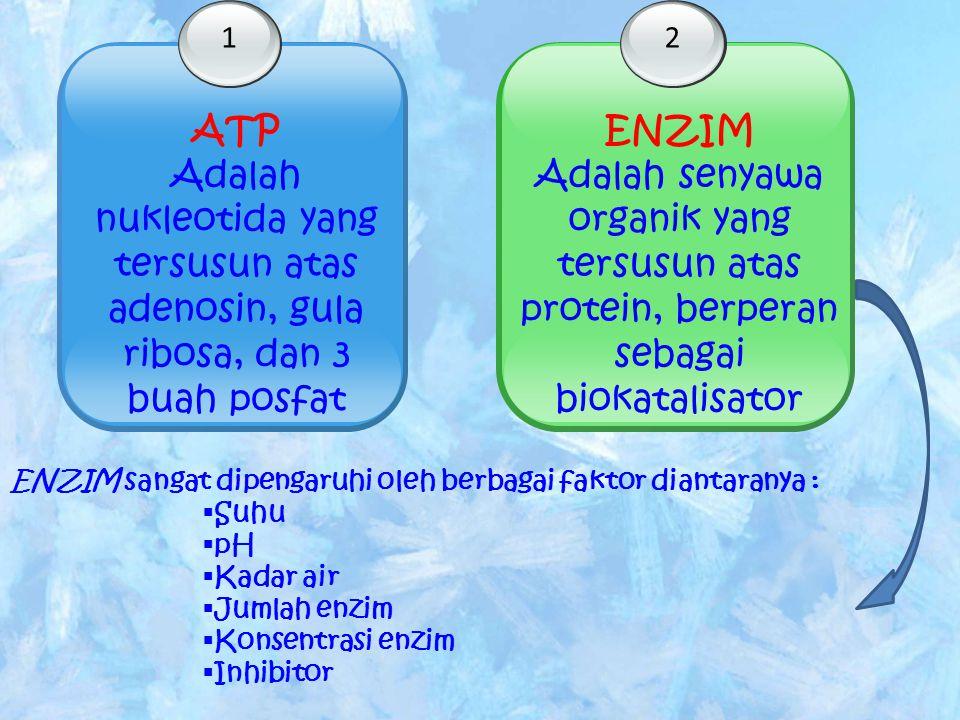 1 ATP. Adalah nukleotida yang tersusun atas adenosin, gula ribosa, dan 3 buah posfat. 2. ENZIM.