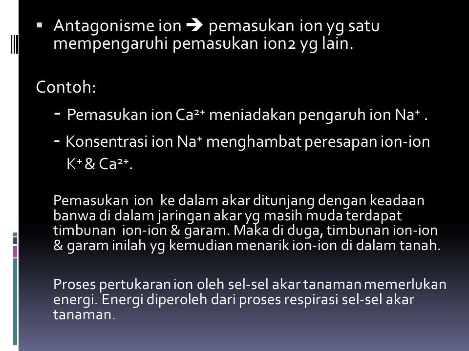- Pemasukan ion Ca2+ meniadakan pengaruh ion Na+ .