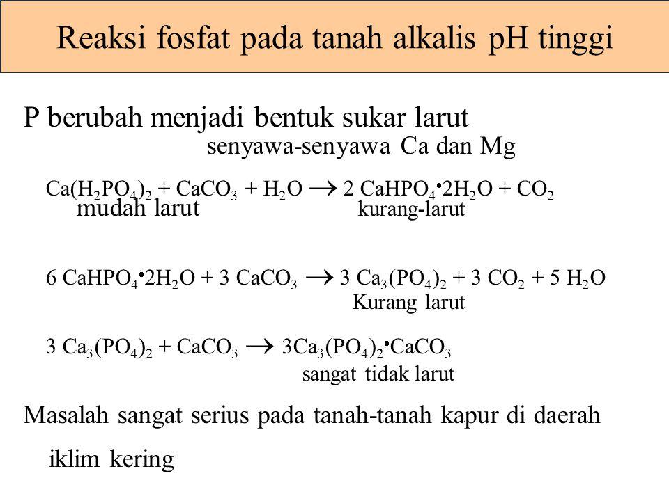 Reaksi fosfat pada tanah alkalis pH tinggi