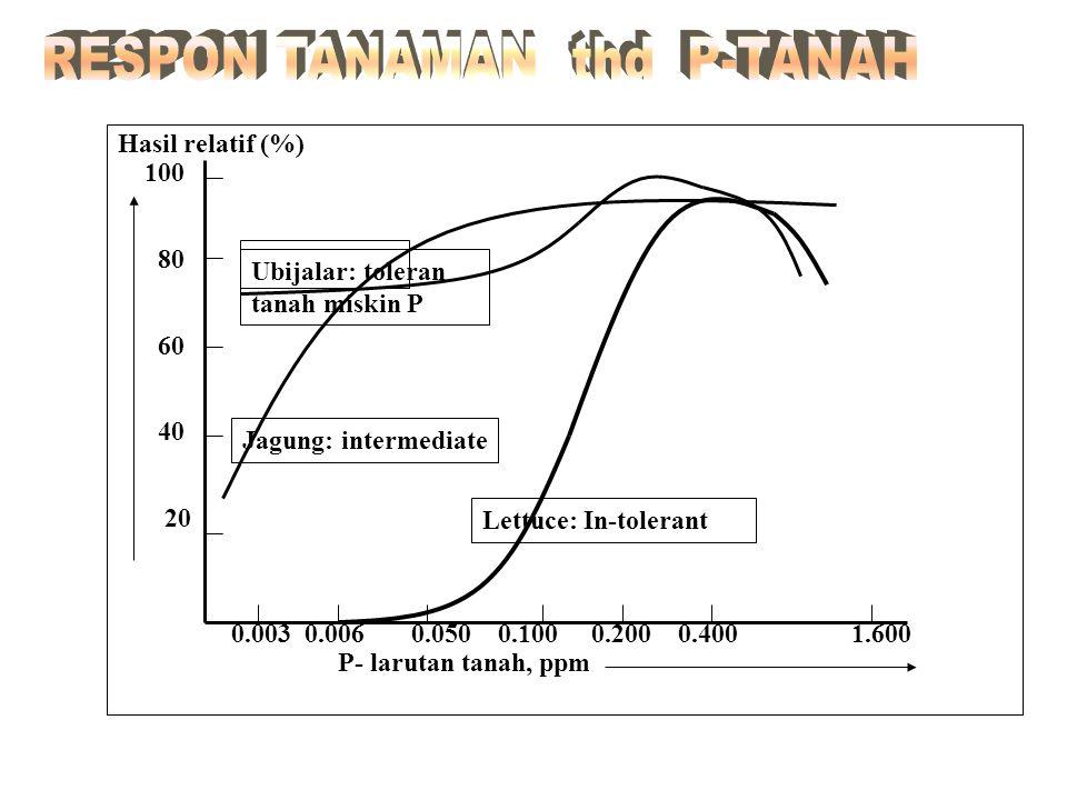 RESPON TANAMAN thd P-TANAH