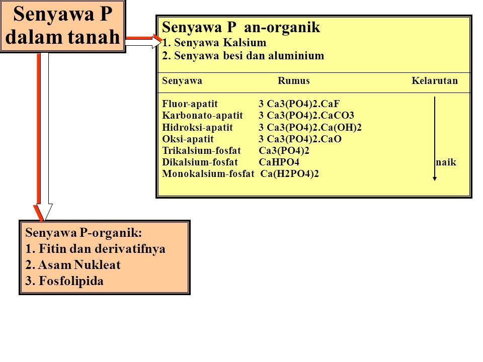Senyawa P dalam tanah Senyawa P an-organik Senyawa P-organik: