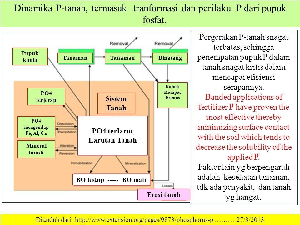 Dinamika P-tanah, termasuk tranformasi dan perilaku P dari pupuk fosfat.