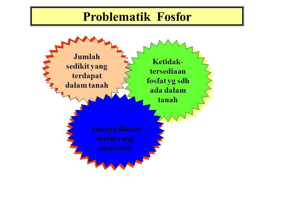 Problematik Fosfor Jumlah sedikit yang terdapat dalam tanah