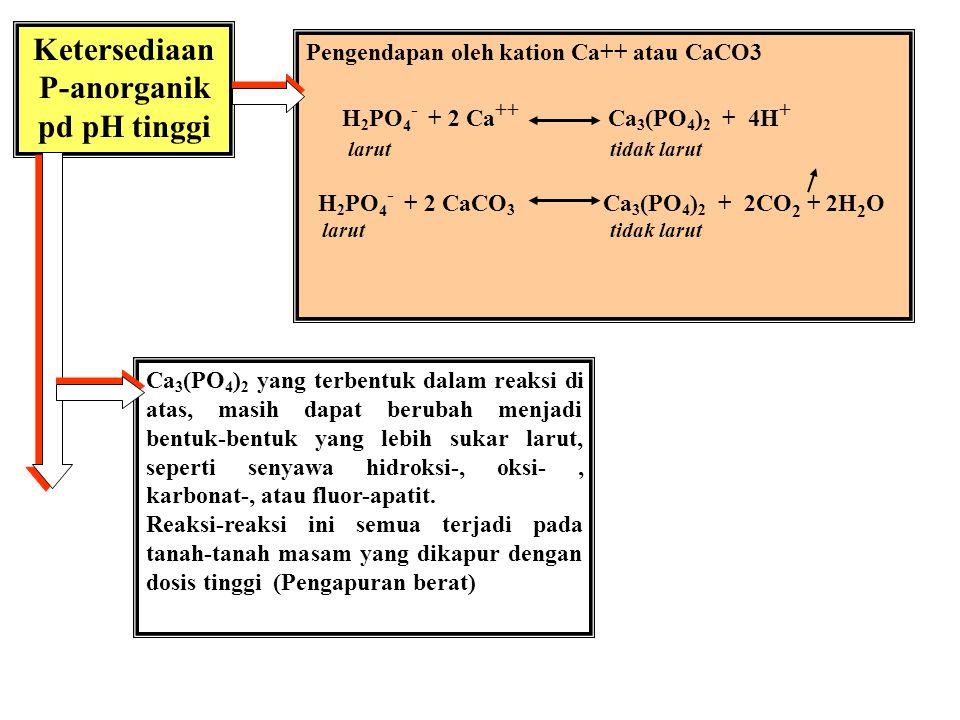 Ketersediaan P-anorganik pd pH tinggi
