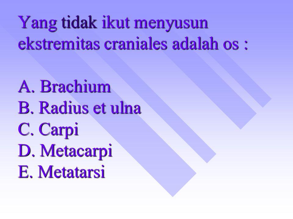 Yang tidak ikut menyusun ekstremitas craniales adalah os : A