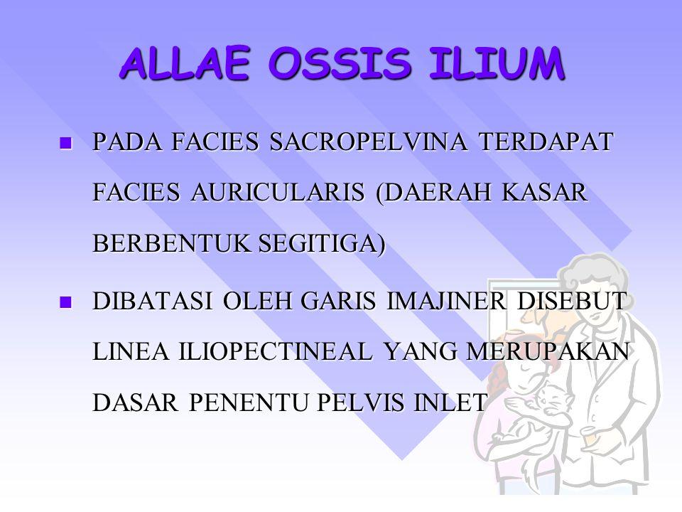 ALLAE OSSIS ILIUM PADA FACIES SACROPELVINA TERDAPAT FACIES AURICULARIS (DAERAH KASAR BERBENTUK SEGITIGA)