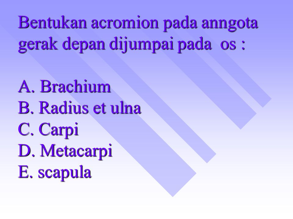 Bentukan acromion pada anngota gerak depan dijumpai pada os : A