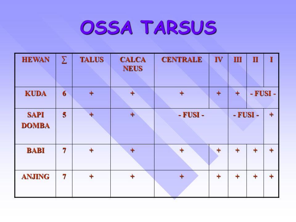 OSSA TARSUS HEWAN ∑ TALUS CALCA NEUS CENTRALE IV III II I KUDA 6 +