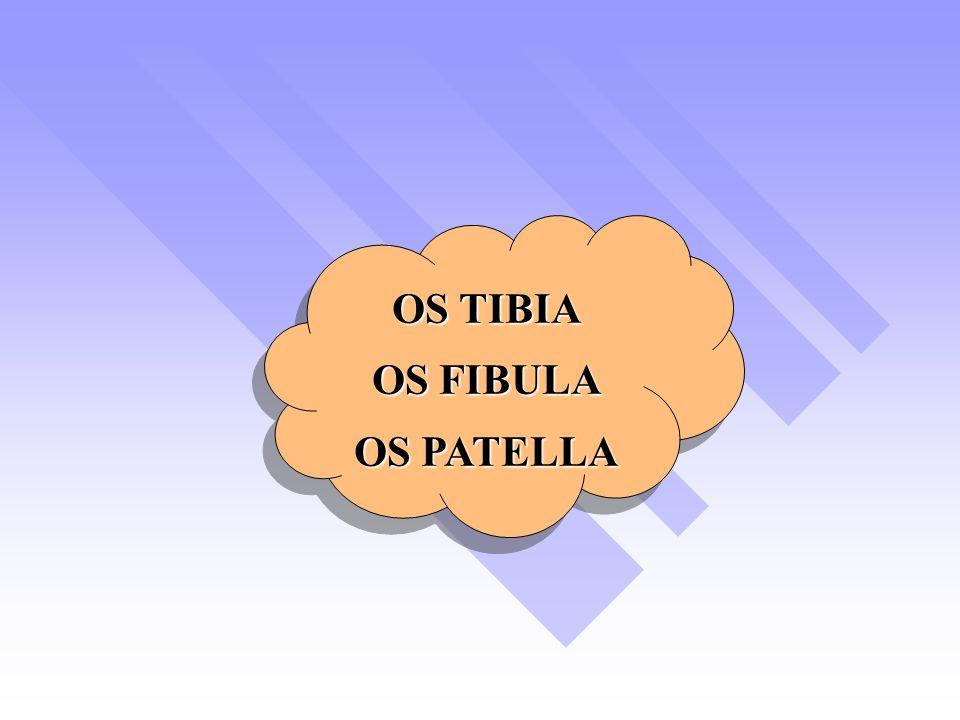 OS TIBIA OS FIBULA OS PATELLA