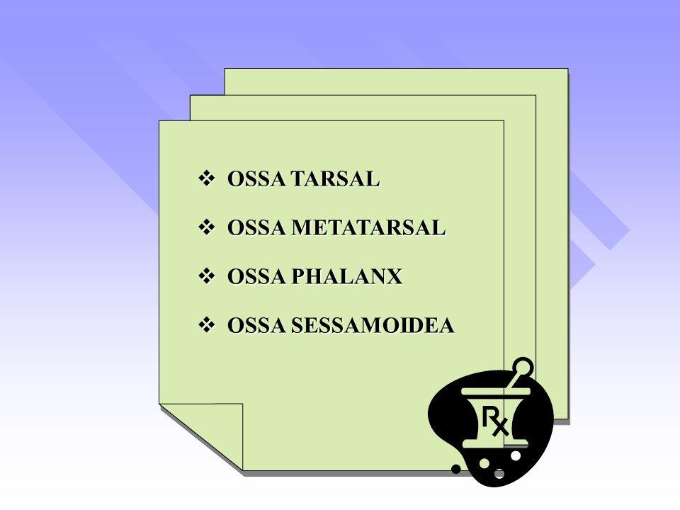 OSSA TARSAL OSSA METATARSAL OSSA PHALANX OSSA SESSAMOIDEA