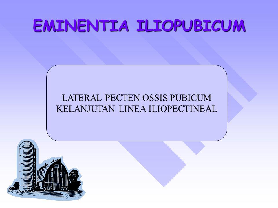 EMINENTIA ILIOPUBICUM