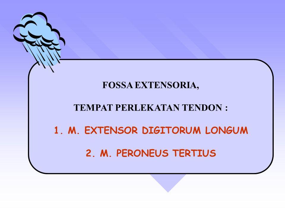 TEMPAT PERLEKATAN TENDON : M. EXTENSOR DIGITORUM LONGUM