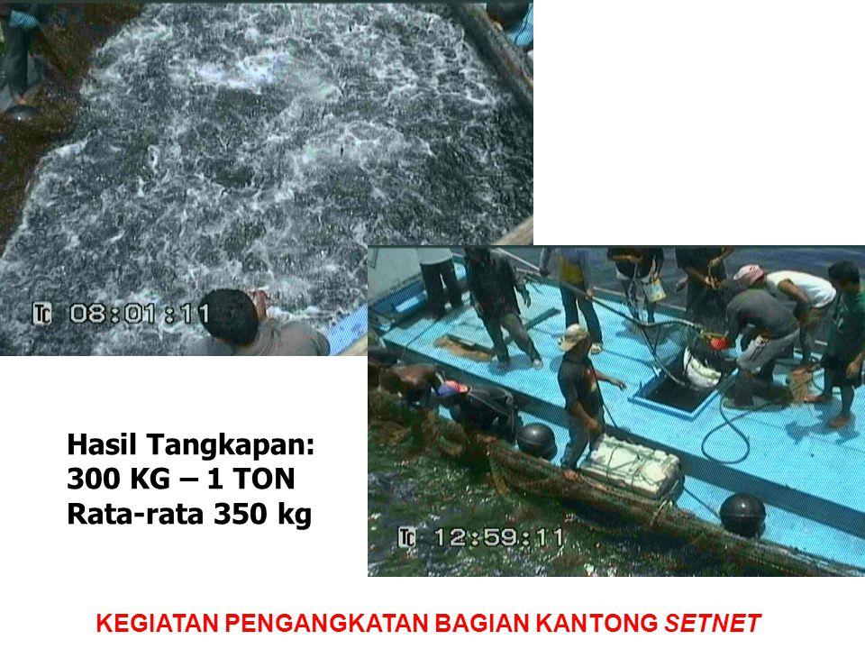 Hasil Tangkapan: 300 KG – 1 TON Rata-rata 350 kg