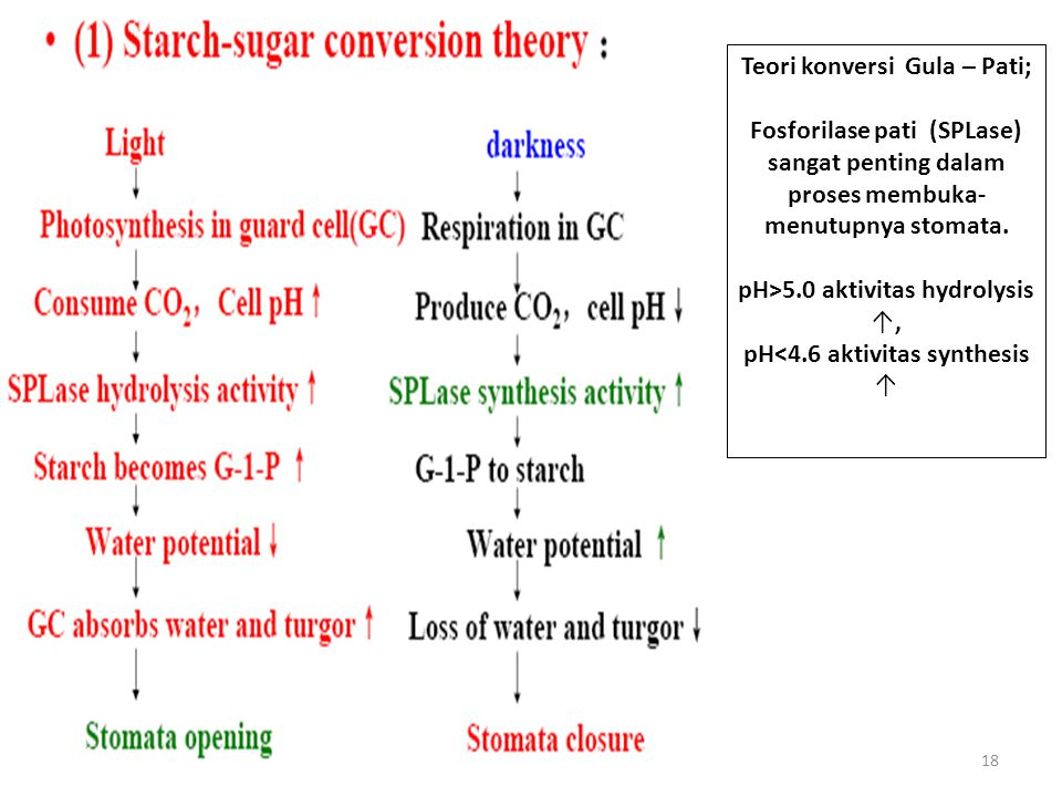 Teori konversi Gula – Pati;