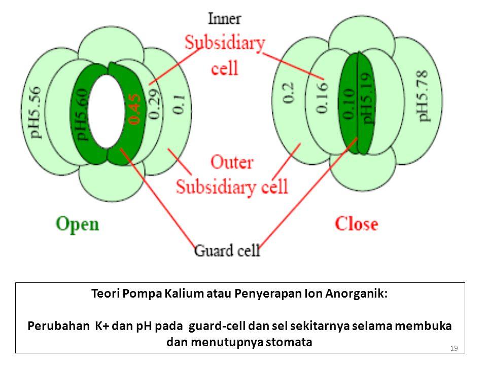 Teori Pompa Kalium atau Penyerapan Ion Anorganik: